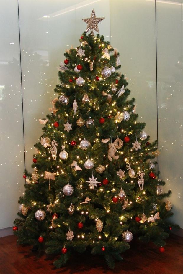 Božićno drvce — Čuvarkuća